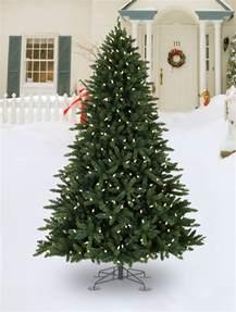 outside tree decorated trees tree