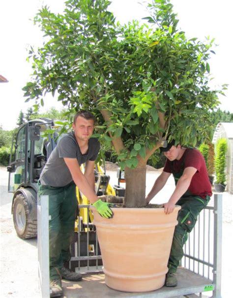 Garten Landschaftsbau Ausbildung Verkürzen by Ausbildung U Karriere