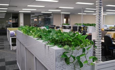 plants for the office indoor plants in office enviroment exterior design