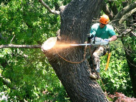tree work tree climber in philadelphia pa giroud tree and lawn