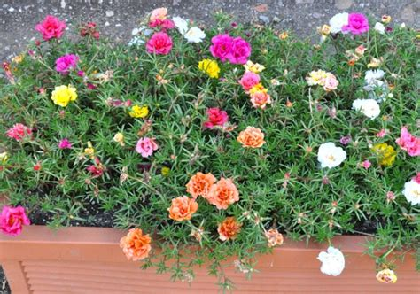 plantes pour jardini 232 res peu gourmandes en arrosage