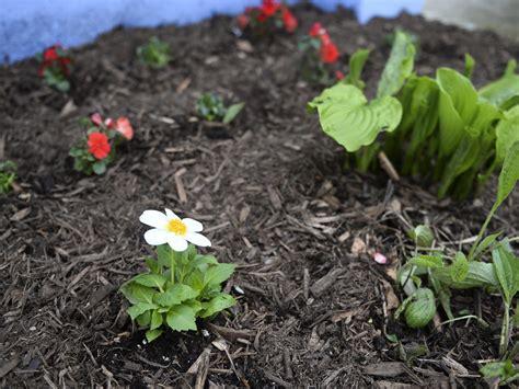 Der Garten Im Oktober by Garten Im Oktober Das Ist Zu Tun Und Auf Keinen Fall