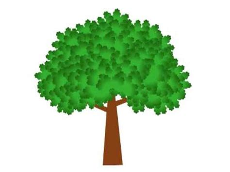 animated tree image growing tree animation