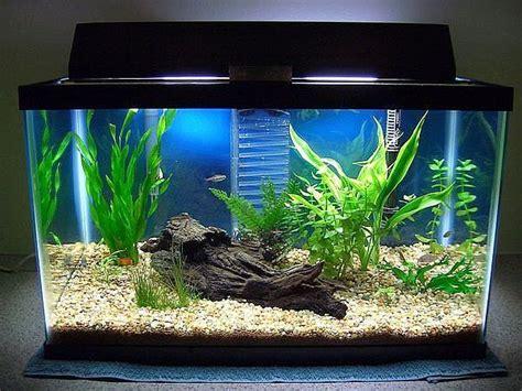 aquarium tank set up mine needs an make someting like this more aqua