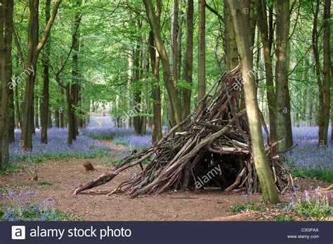 tree made of branches shelter made of tree branches in bluebell forest uk stock