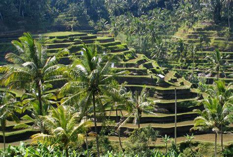 in bali travel must visit ubud bali simplynavy