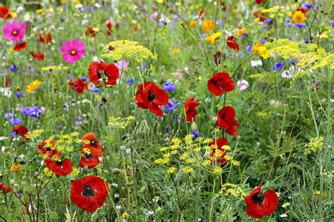 semer un tapis de fleurs d 233 tente jardin