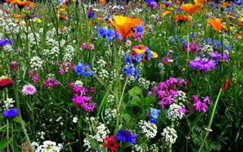 Der Bienenfreundliche Garten by Bienenfreundliche Pflanzen Auf Balkon Terrasse Und Garten