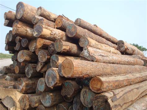 woodworking logs tropical wood log