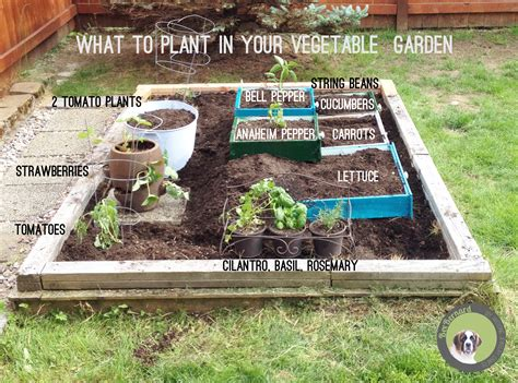 how to make home vegetable garden what to plant in your garden finished side view vegetable