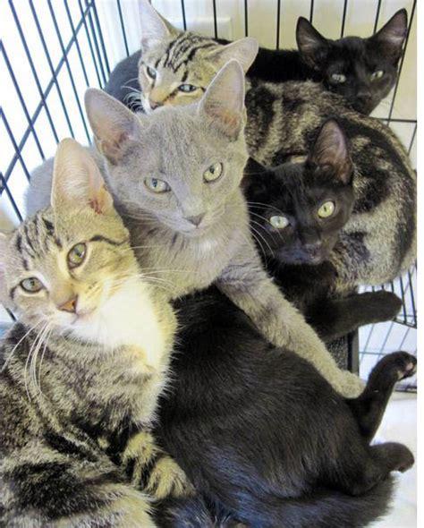 of a cat cat pile