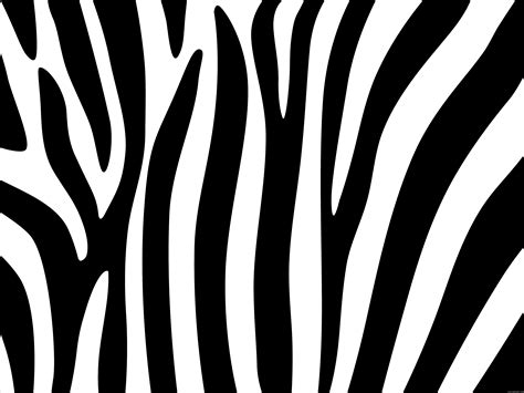 zebra stripes zebra stripes design psdgraphics