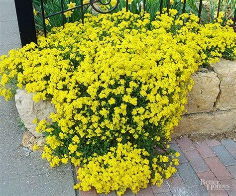 best plants for rock gardens best 25 rock garden plants ideas on plants