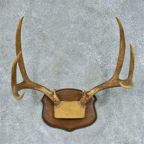 deer antler mule deer antler european mount for sale 13454 the