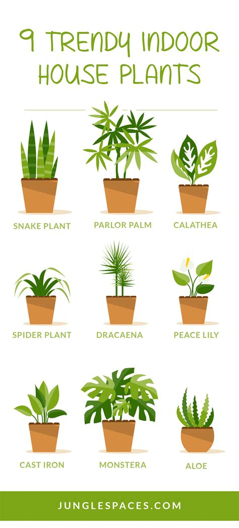 houseplants that don t need sunlight 100 plants that don t need sunlight to grow 25 easy
