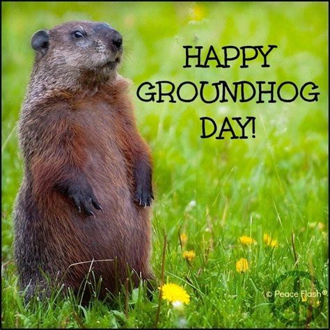 32 Best Images About Ground Hog Day On Up