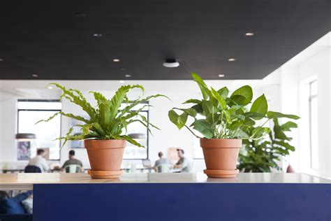 plants for the office how to choose the best office plant for your work space