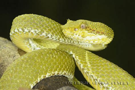 Flickr: The Arboreal Snakes Pool Arboreal Snakes