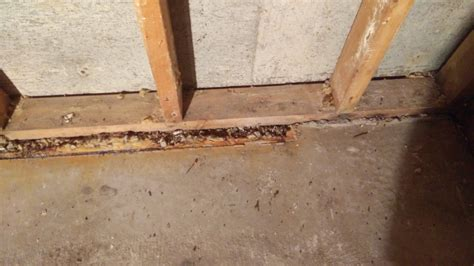 how to out a basement re framing basement walls after flooding drain tile with