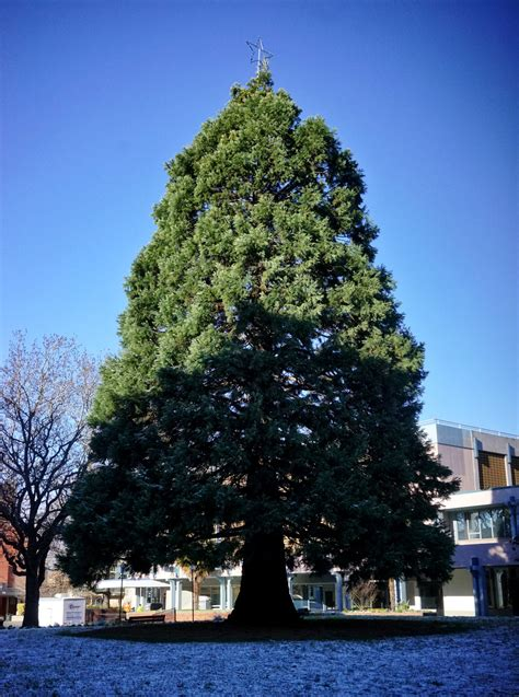 daily photo pioneer square tree