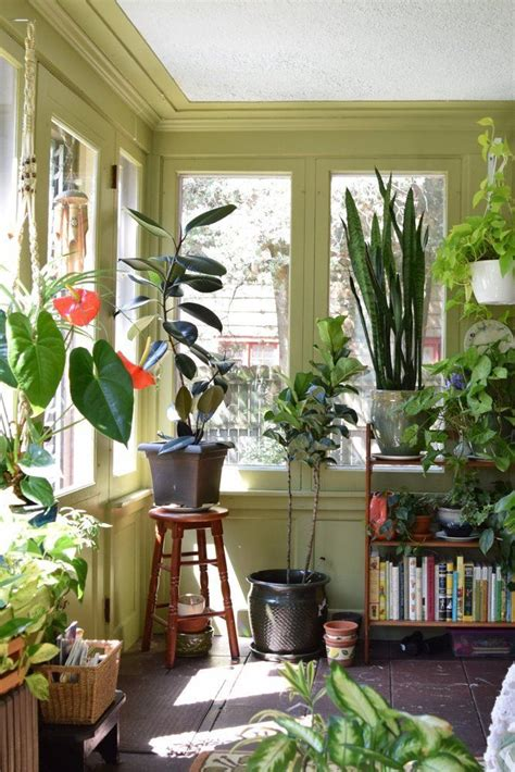 house for plants 1000 ideas about house plants on plants