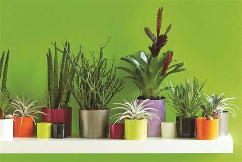 conseil donnez du style 224 votre maison plantes d int 233 rieur jardinerie truffaut conseils