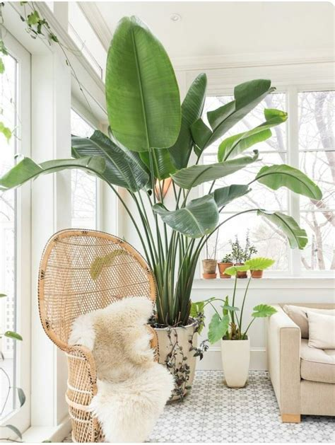 large indoor planter 25 best ideas about large indoor plants on