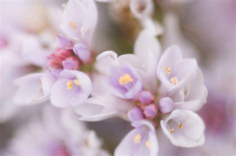 beautyful flowers flowers light