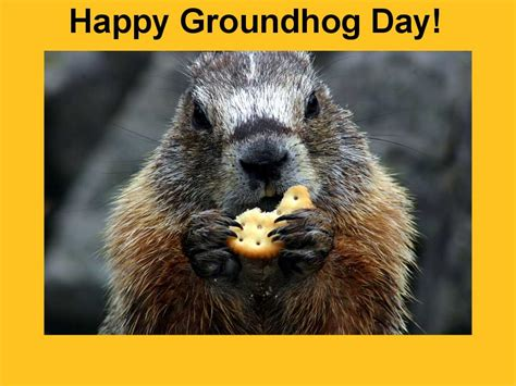 groundhog day meaning in groundhog day wallpapers wallpaper cave