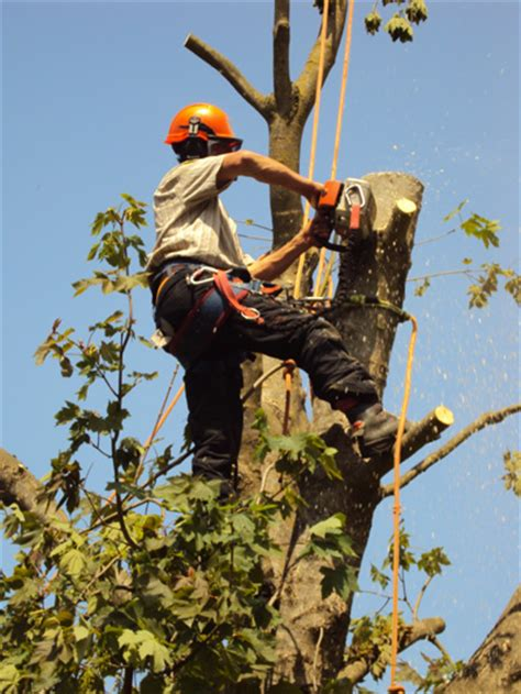 tree work southern tree works fully qualified tree surgeons and