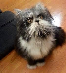 like a cat true anormaldayinrussia