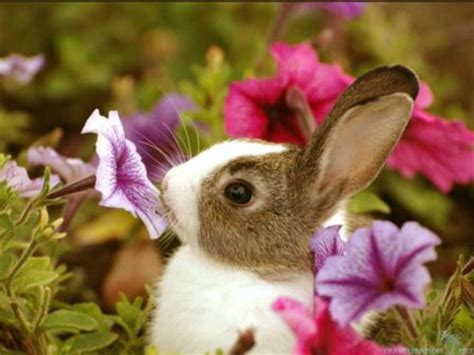 flower and bunny this yard the for all your green care needs