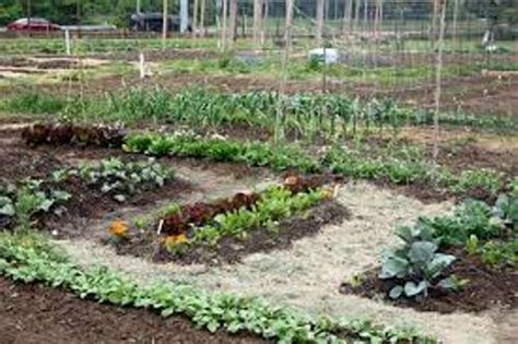 how to make your own vegetable garden how to make your own vegetable garden soil 5 guides for