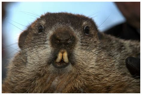 groundhog day play new modes or keep ground hog day play