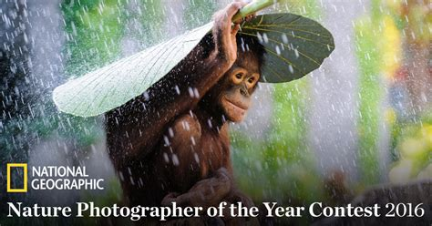best of the year 2016 national geographic nature photographer of the year