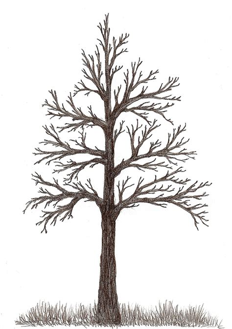 tree drawing dia inspiration