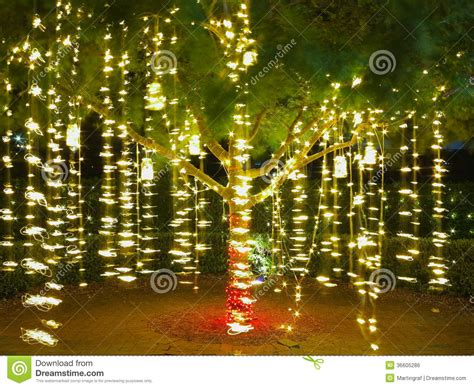 lights in trees lights in tree summer royalty free stock