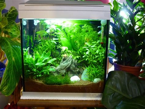 aquarium pour un combattant association aquariophilie org