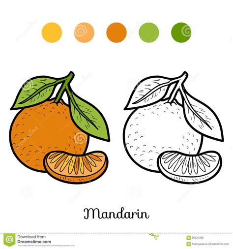 coloring book fruits and vegetables mandarin stock