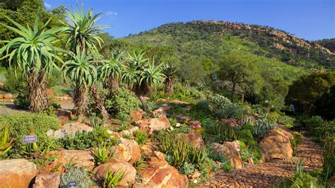 walter sisulu botanical garden gardens parks pictures view images of johannesburg