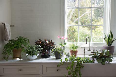 best plant for indoor low light best houseplants 9 indoor plants for low light gardenista