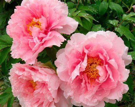 garden flower types flower types