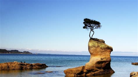 rock the tree tree growing on a rock at the seashore wallpaper walldevil