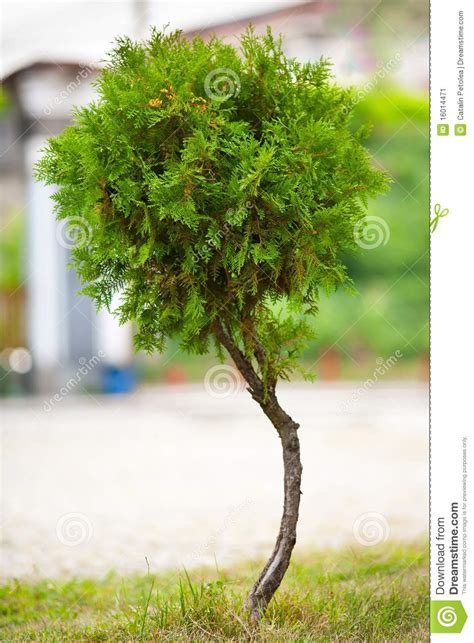 tree for baby baby tree stock image image 16014471