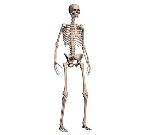 a skeleton skeleton gaia 3d solutions for schools colleges