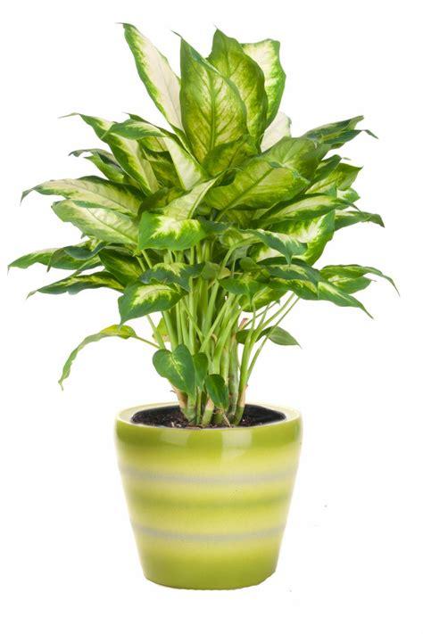 low light indoor flowers indoor plants low light hgtv