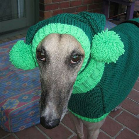 knitting for greyhounds quit to knit sweaters for cold abandoned