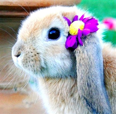 flower and bunny flower bunny
