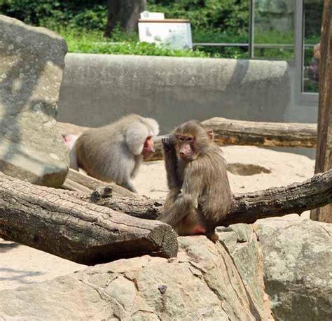 Der Zoologische Garten Berlin by Zoologischer Garten Berlin Zoo Berlin Wahrzeichen Berlin
