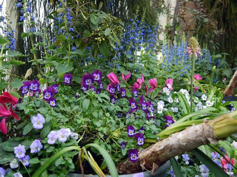 garden flowers perennials cold climate gardening growing hardy perennials in